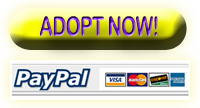 Adopt now!