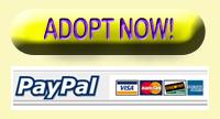 Adopt now!